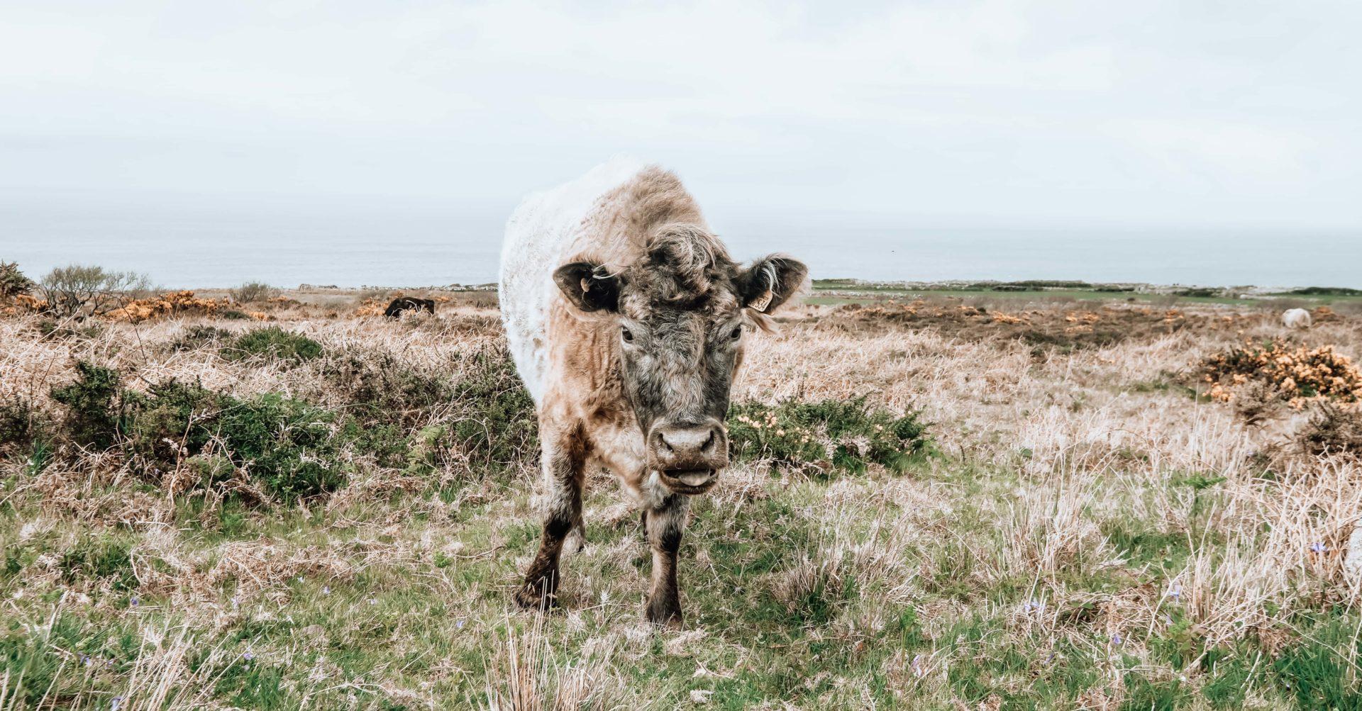local datant du Nord Devon