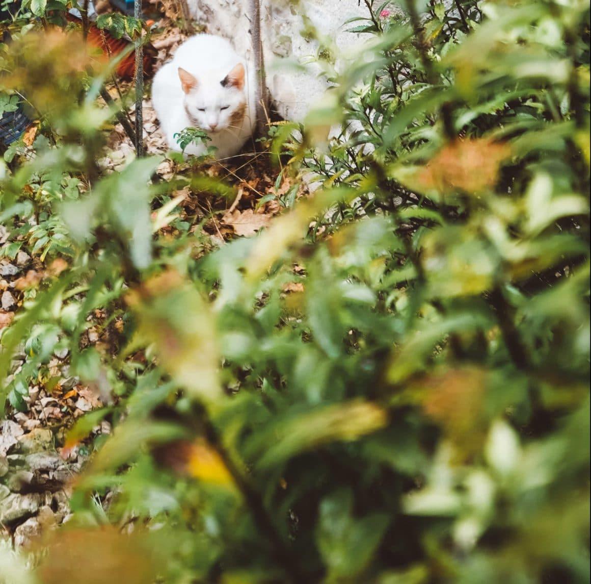 Un chat se cache