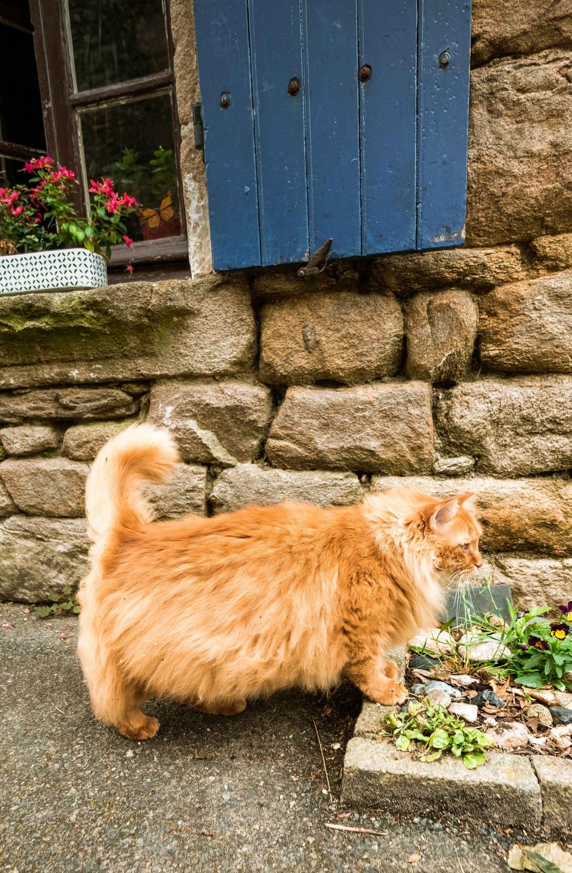 Un chat à Piriac vacances Loire-Atlantique